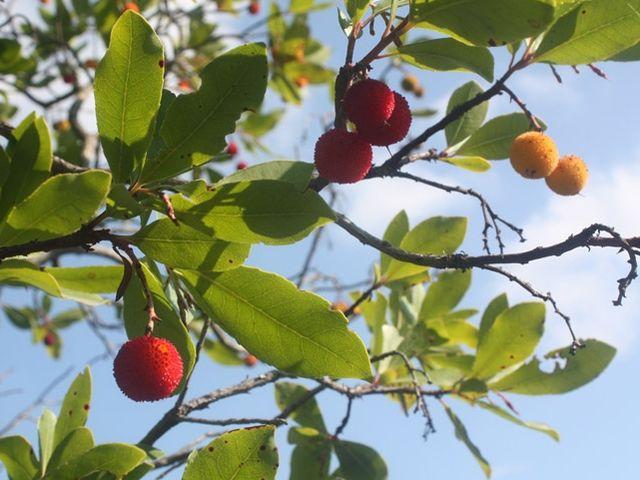 Testez vos connaissances sur la corse playbuzz - Association plantes aromatiques entre elles ...