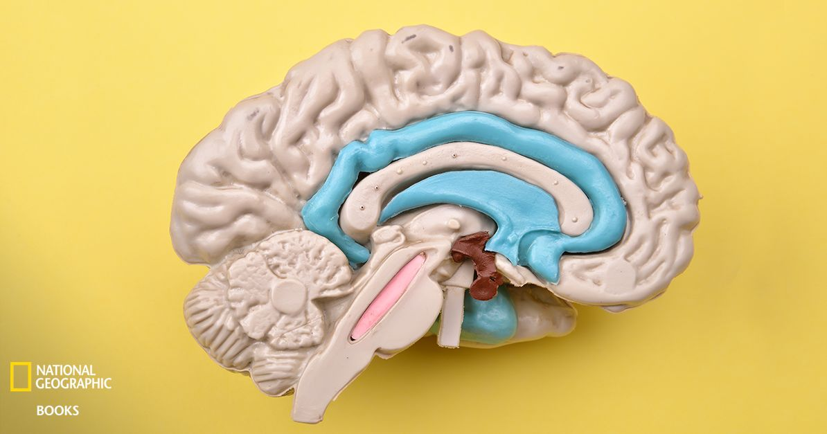 Can You Name The Parts Of The Brain? | Playbuzz