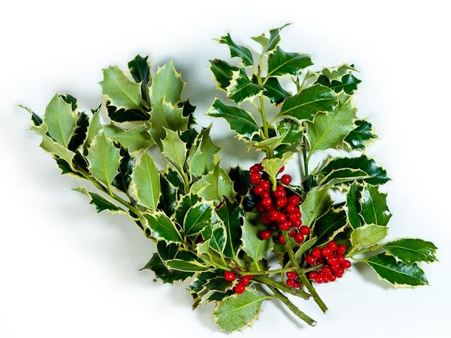 What do you call these decorative holly branches?