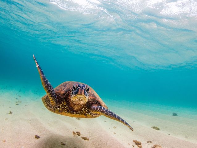 Which animal species is the turtle's closest relative?