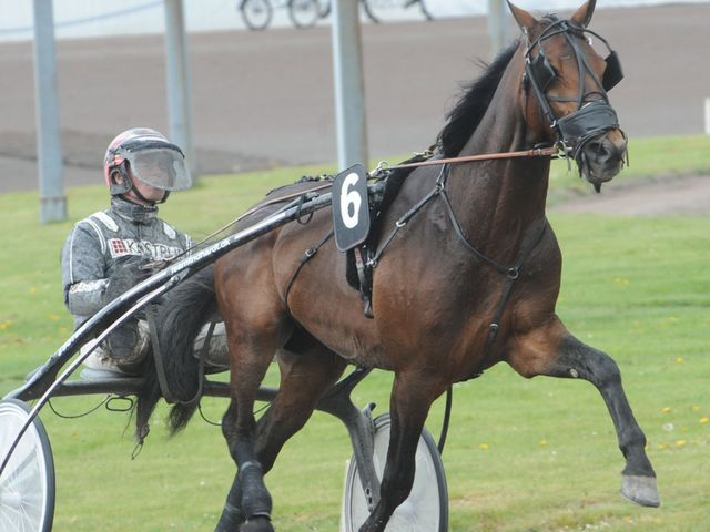 This horse is racing in the 2016 International Trot : Tano Bork, where's he from?