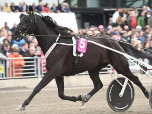 Vidar Hop will drive B.B.S. Sugarlight on October 15th, who drove him last year?