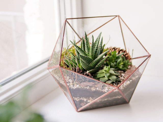 Which plant would you choose for your apartment?