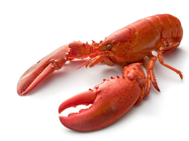 It's a known fact that lobsters fall in love and mate for life.