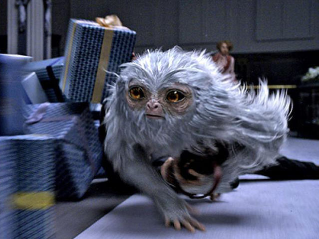 Where would you find the elusive Demiguise creature?