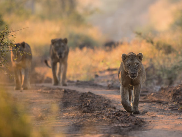 How old is the Kruger National Park this year?