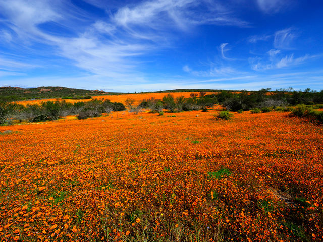 Name the Namaqua National Park's most popular season