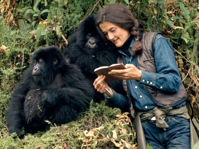 "What was the name of the primatologist who lived with gorillas and was made famous by the movie ""Gorillas in the Mist""?"