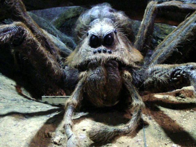 Who was Aragog's wife?