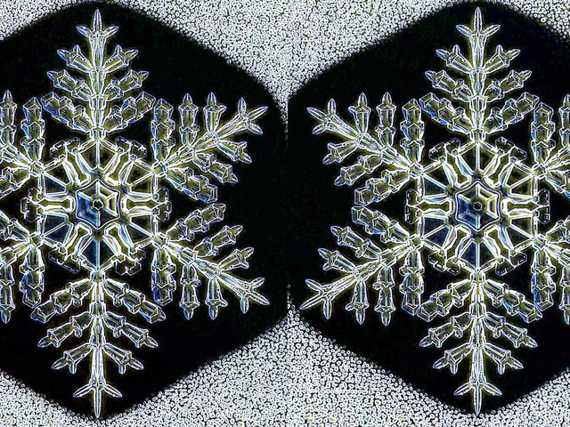 It's true! While for the most part, each snowflake is unique, these two were a rare case of identical flakes!