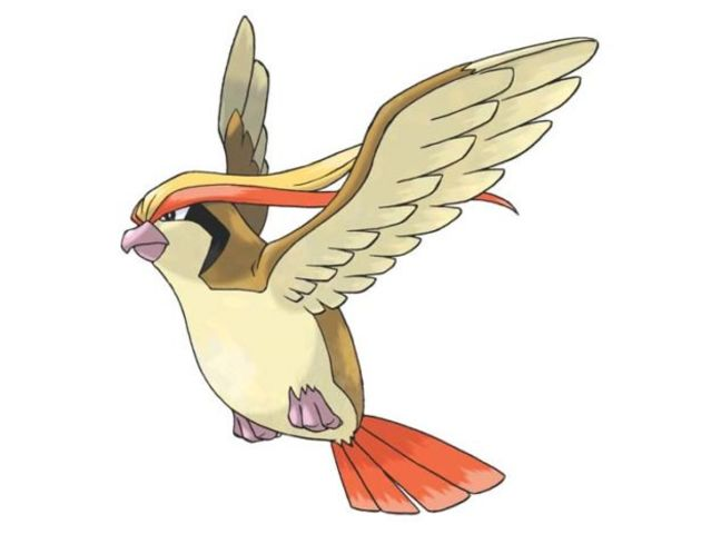 It's Pidgeot!