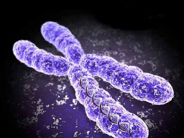 How many pairs of chromosomes do we have?