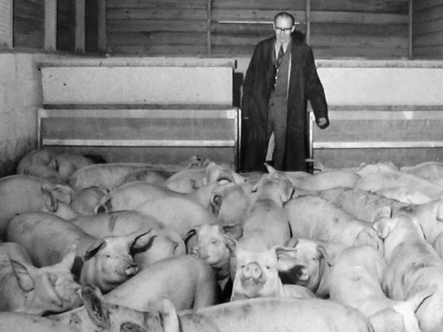 Mr Thomas set up both Willow and Grafton Pig Farms. He specialised in breeding pigs for...