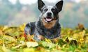 8 Dog Breeds That Love The Country Life