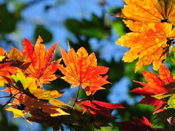 What Delightful Autumn Color Are You?
