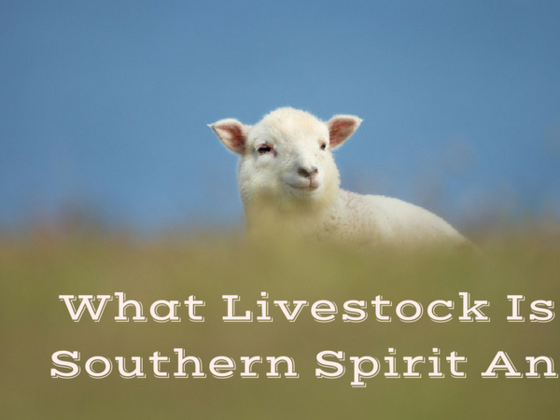 What Livestock Is Your Southern Spirit Animal?