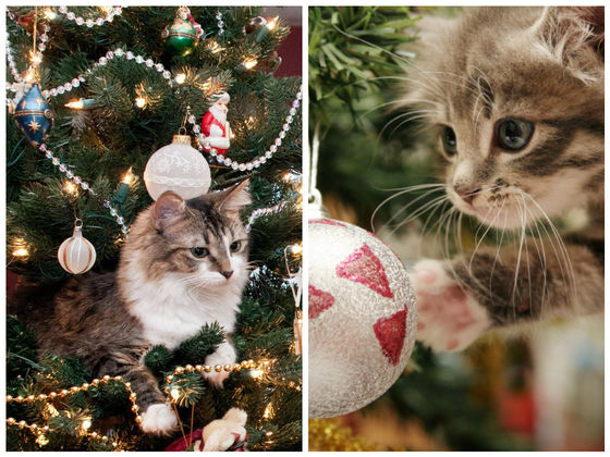 The Three Best Ways Cats Can React To Christmas Trees