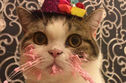 This Cat Eating It's Birthday Cake Is An Actual Cat And Not A Meme