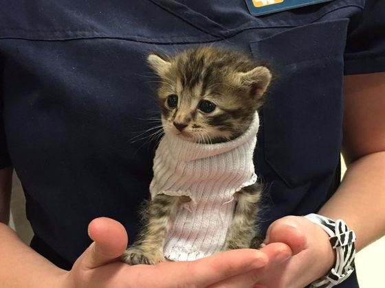 This Adorable Kitten Was Saved From Hurricane Matthew And They Put Her In A Sweater!