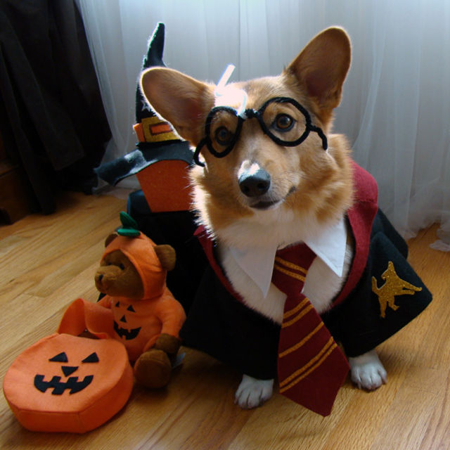 What's the Best Dog Halloween Costume of All Time? [Quiz] | Rover.com
