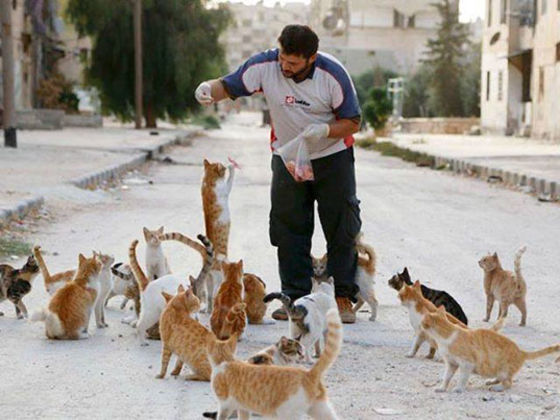 Whilst Many Flee Aleppo, Syria, One Brave Soul Remains To Care For Their Cats