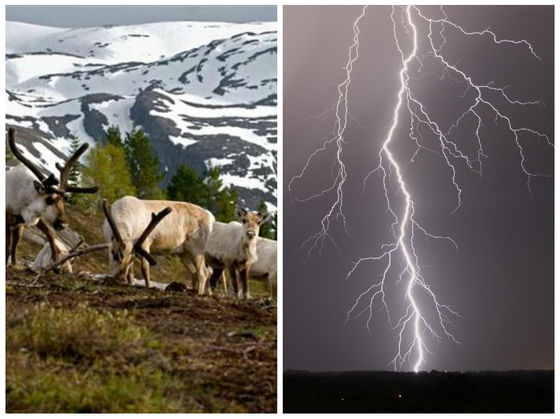 Lightning Struck In Norway And Resulted In Over 300 Reindeer Deaths This Weekend