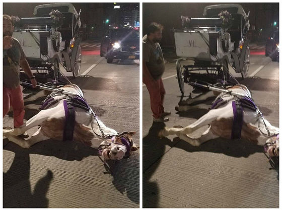 A New York Carriage Horse Collapsed In The Street— Do You Think We Should Be Worried About Carriage Horses?