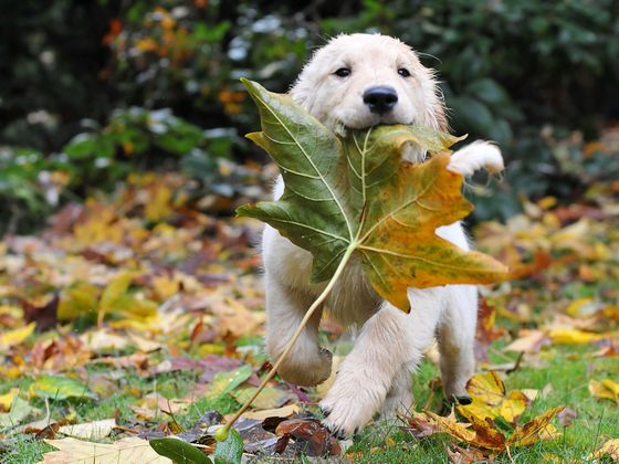 Pick Your Fave Photos Of Frolicking Fall Pups And We'll Tell You What Kind Of Dog You Should Adopt!
