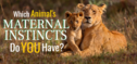 Which Animal's Maternal Instincts Do You Have?