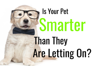 Is Your Pet Smarter Than They Are Letting On? This Quiz Will Determine If Your Pets Are Silly or Savants