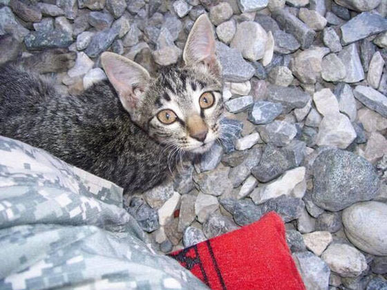 This Soldier Refused To Leave A Sick Kitten Behind!