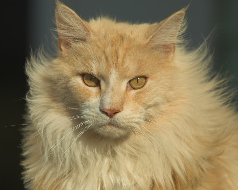 17 43 Playbuzz What Cat Breed Are You