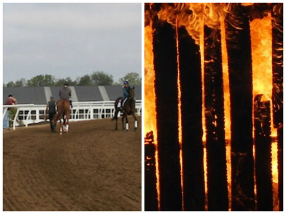 A Kentucky Barn Fire Has Tragically Killed Nearly Two Dozen Horses