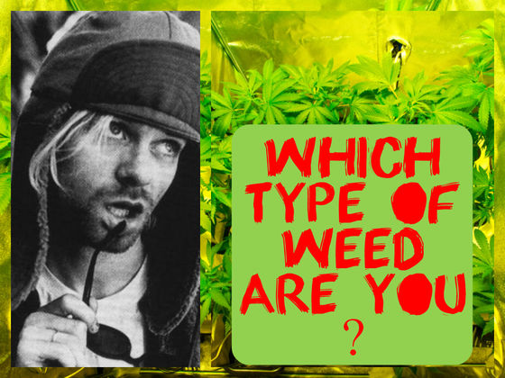 Which Type Of Weed Are You?