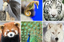 Which Exotic Animal Describes Your Soul?