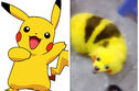 A Pokemon Fan Dyed Their Dog To Look Like A Pikachu And The Internet Is Not Happy