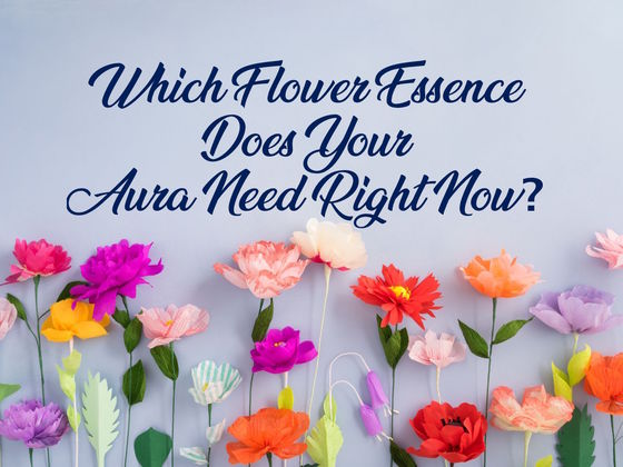 Which Flower Essence Does Your Aura Need Right Now?