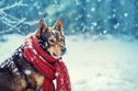 How To Protect Your Pet From Cold Temperatures