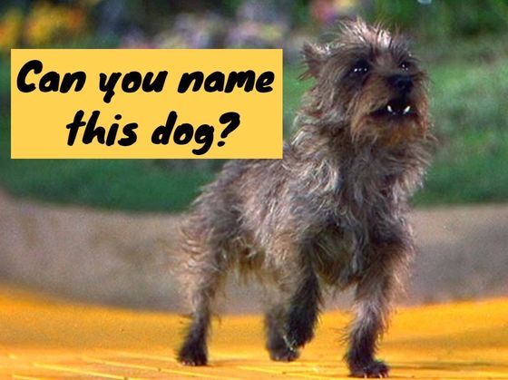 Only 4% Of Women Can Name These 15 Movie And TV Dogs. Can You?