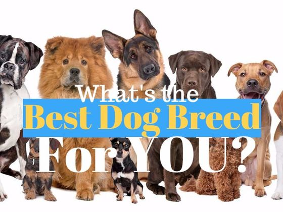 What Is The Absolute Perfect Dog Breed For You?