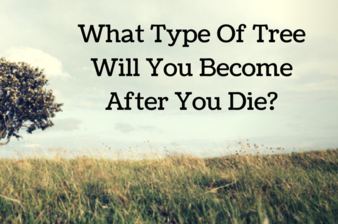 What Type Of Tree Will You Become After You Die?
