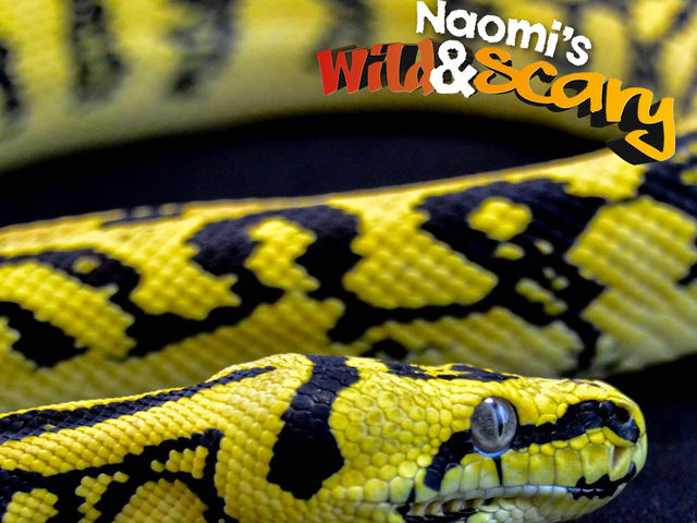 What is another name for a carpet python?