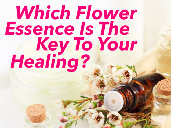 Which Flower Essence Is The Key To Your Healing?