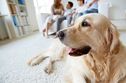 Fast Facts About The 7 Best Dog Breeds For Families