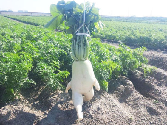 Fruits And Vegetables That Looks Like Something Else