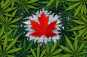 Checking In: Cannabis And Canada