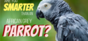 Are You Smarter Than A Parrot? Get 10/12 And You Are!