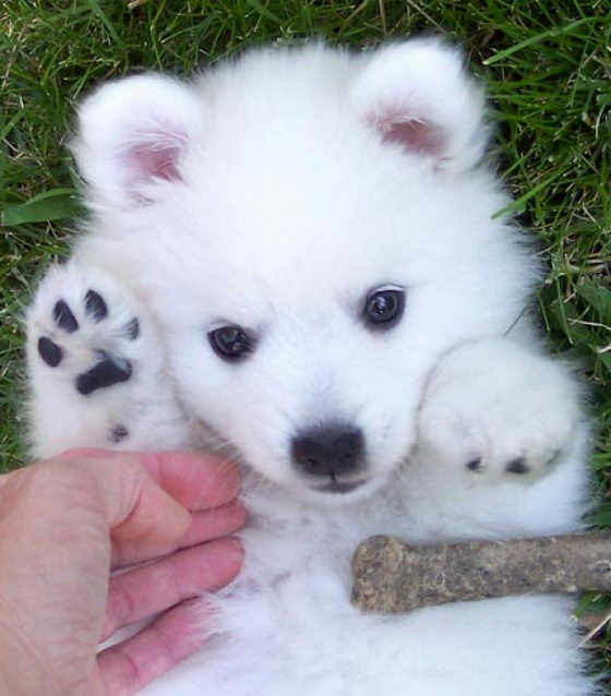 What Baby Puppies Are The Cutest Playbuzz