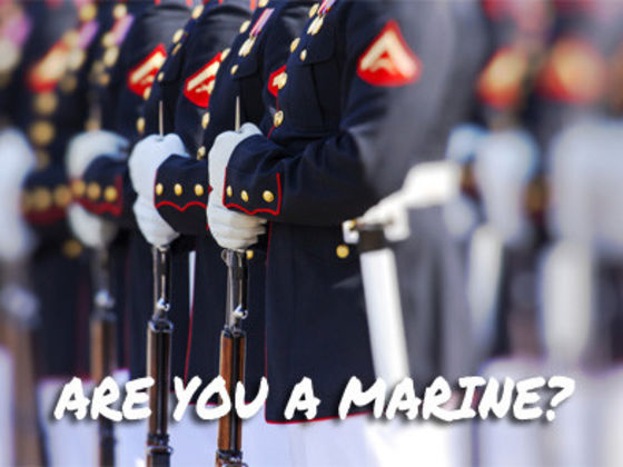 Which Branch of the Military Do You Belong to?