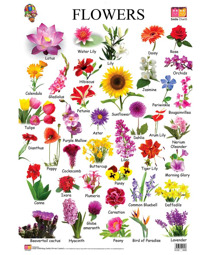 Do You Recognize These Common Flowers Every Should Know Playbuzz